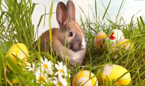 Wielkanoc w Aparthotelu Bambi!